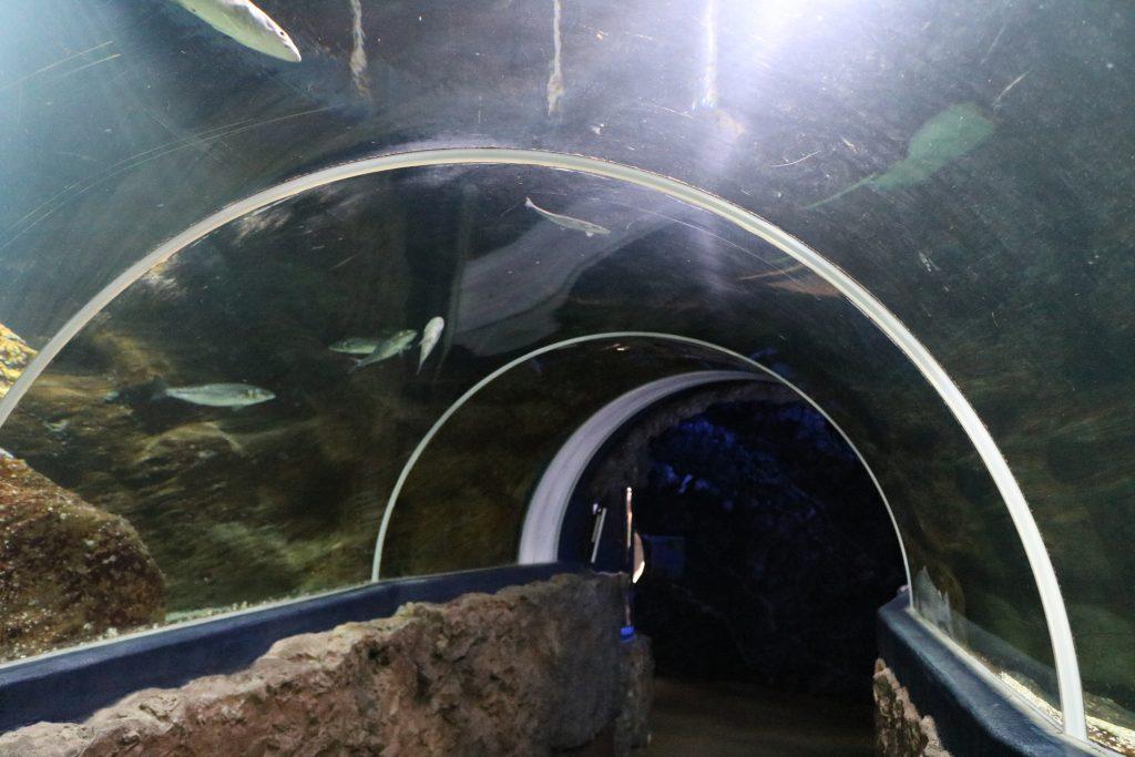 Sylt-Aquarium-10