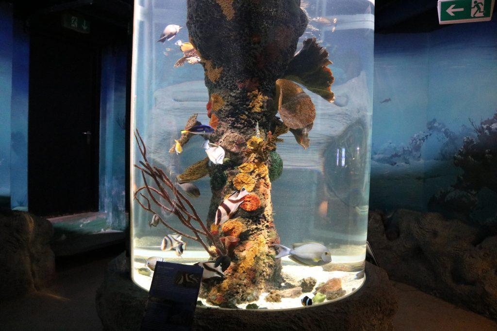 Sylt-Aquarium-25