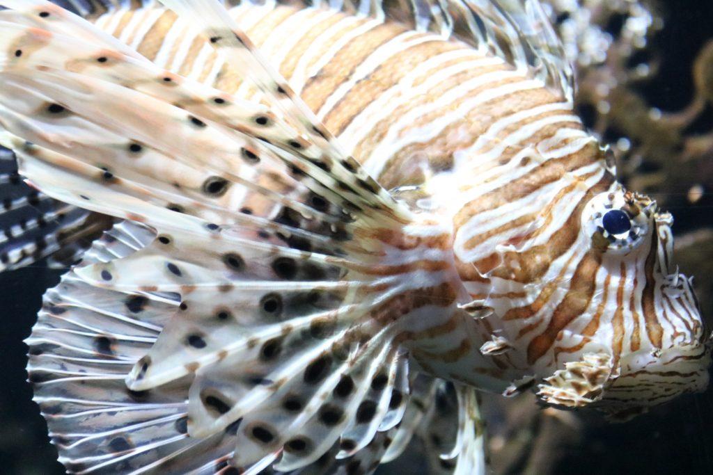 Sylt-Aquarium-13