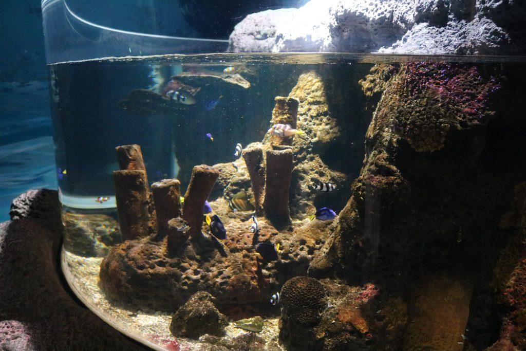 Sylt-Aquarium-12