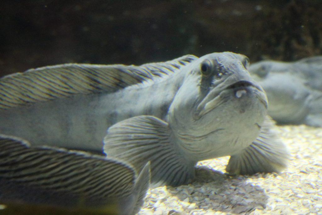 Sylt-Aquarium-27